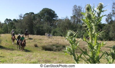 Riding horses on a ranch - A steady wide shot of people...