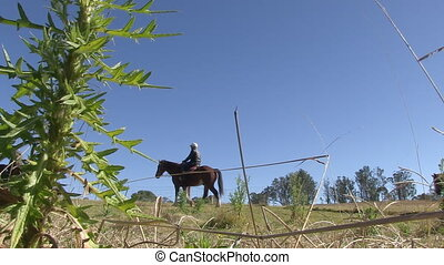 Riding horses on ranch - A low angle wide steady shot of...