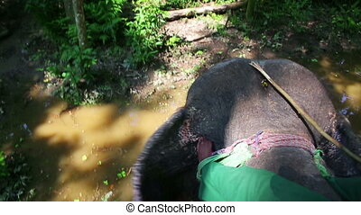 Riding on elephants back, Chitwan, Nepal