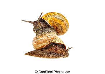 Riding snail