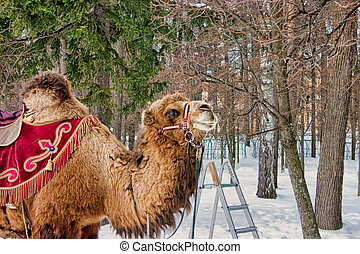 Riding the Camel, Archangelskoe Manor 2009. - The cold...