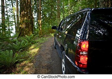 Riding Thru the Forest