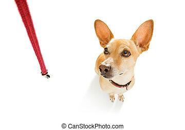 riem, wandeling, dog, wachten
