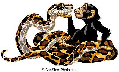 riesenschlange, schimpanse, karikatur