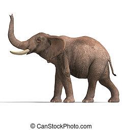 riesig, elefant