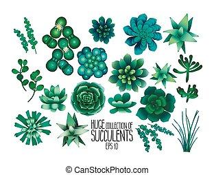 riesig, sammlung, von, succulents