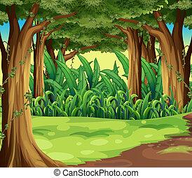 riesig, wald, bäume