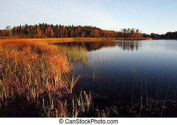 riflessione, alba, lago