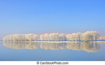 riflessione, di, alberi inverno