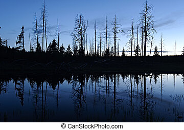 riflessione, silhouet, parco nazionale, yellowstone, stagno