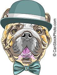 rigolote, bouledogue, race, chien, vecteur, hipster, anglaise, dessin animé