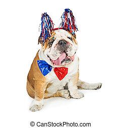 rigolote, chien, américain, quatrième, patriotique, juillet