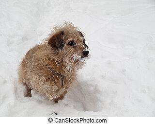 rigolote, chien basset allemand