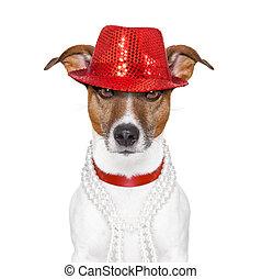 rigolote, chien