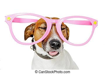 rigolote, chien, lunettes