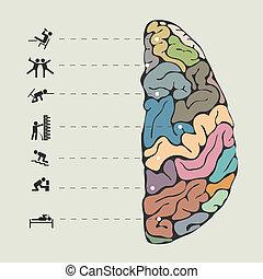 rigolote, concept, cerveau humain