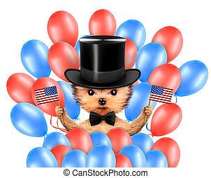 rigolote, concept, usa, flag., chien, 4ème, tenue, juillet