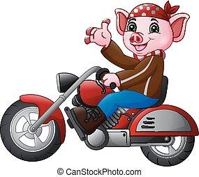 rigolote, dessin animé, motocyclette, équitation, cochon