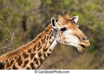 Norme cou type caract re dr le girafe langue norme - Girafe rigolote ...