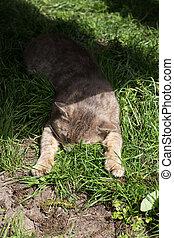 rigolote, herbe, reposer, chat