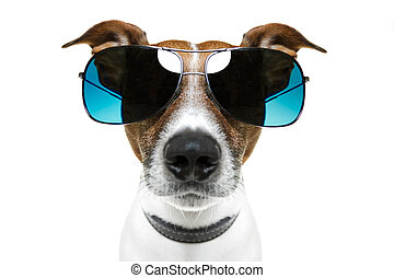 rigolote, nuances, chien