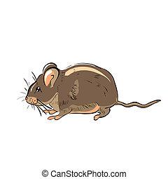 rigolote, rat, dessiné, illustration, main