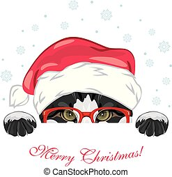 rigolote, regarder dérobée, casquette, chat, noël, rouges, lunettes
