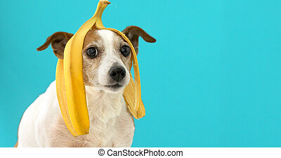 rigolote, tête, sien, peler, chien, portrait, banane
