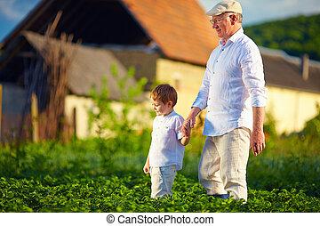 rijen, homestead, kleinzoon, aardappels, samen, grootvader, ...
