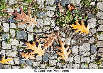 rijhuis, bladeren, eik, herfst, bestrating