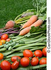 rijp, groentes, brandpunt, selectief, rood, verse tomaten