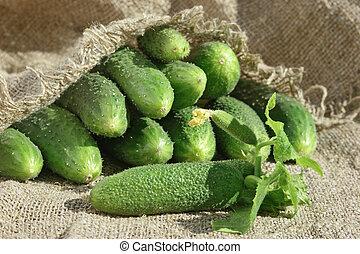 rijp, komkommer, in, tuin