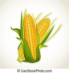 rijp, mais op het cob