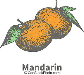 rijp, mandarijn, sappig, hand-drawn, vector, tekening