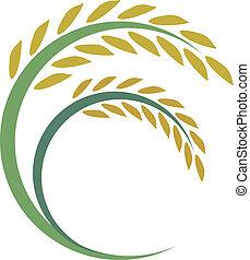rijst, ontwerp, op wit, achtergrond