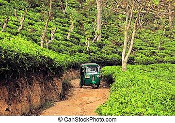 rikshaw, tee, sri, feld, plantagen, lanka