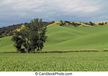 rimbombante, fattoria, verde, campi