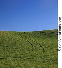rimbombante, frumento verde, campi, con, cielo blu