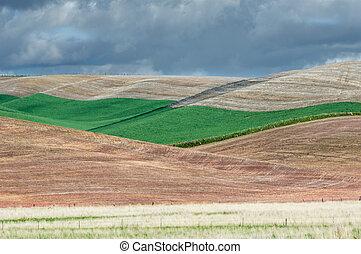 rimbombante, verde, campi, di, frumento