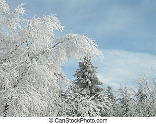 Rime - Tree with rime