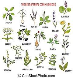 rimedi, erbe, tosse, naturale