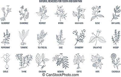 rimedi, naturale, dolore, set., gengiva, dente, botanico