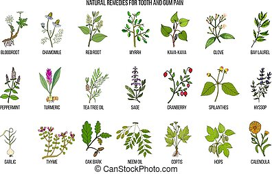 rimedi, set, naturale, dolore, gengiva, dente, botanico