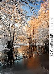 rimfrost, vinterligt, träd