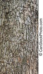 Rind - Texture of old tree rind