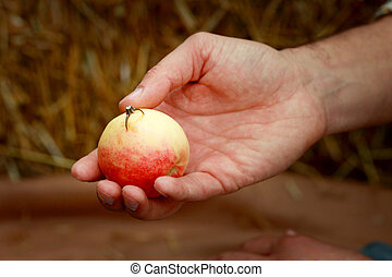 Ring in the apple