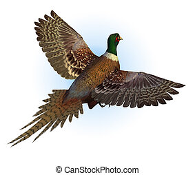 Ring-necked Pheasant Flying - 3d render.