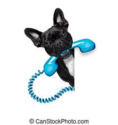 ringa, telefon, hund