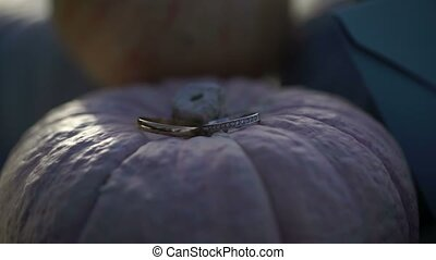 Rings on pumpkins at sunny day