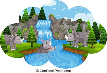 rinoceronte, agua, vivo, luego